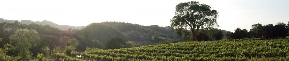 Warnecke Vineyard