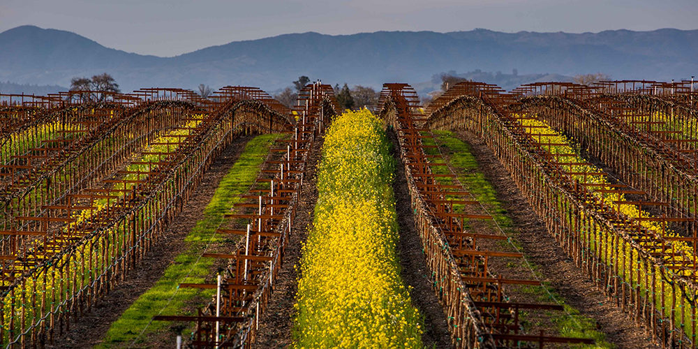 Sonoma County winegrowers commits to 100% sustainability