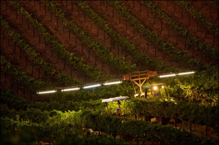 Night Harvest in Sonoma County captured by photographer George Rose
